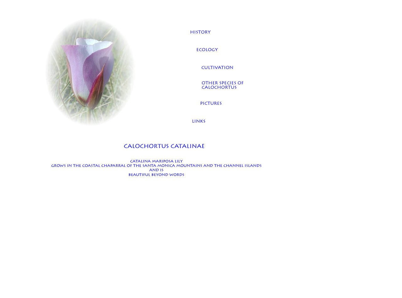 Catalina mariposa lily. Text links at bottom of page.